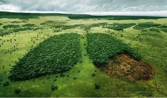 环保-爱博绿
